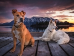 Dogs on a Wooden Piar