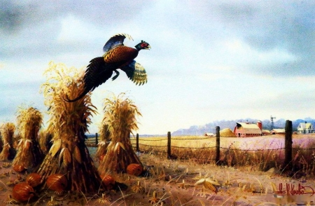 Mid October - fence, corn, pheasant, painting, artwork, field