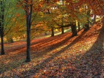 Autumn Park!