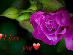 ❤️ I love you ❤️