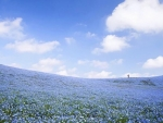 ~ field of flowers ~