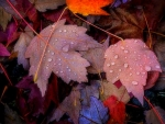 ✿⊱•╮Dew on Leaves╭•⊰✿