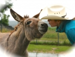 Donkey's kiss
