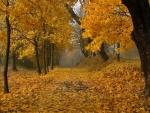 Path Through The Autumn Forest