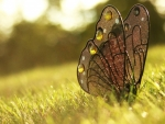 ஐ  butterfly ஐ