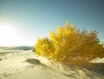 *Desert*