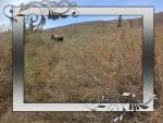 Moose In National Park Alaska