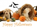 Halloween dogs in the basket