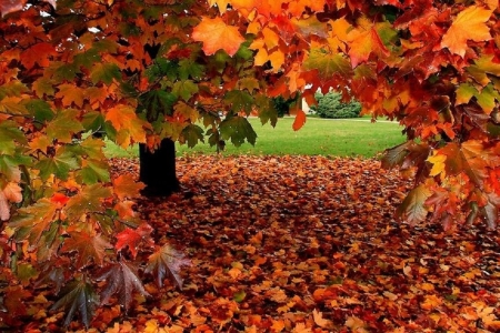Fall Leaves Trees Other Nature Background Wallpapers On