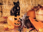cute cats on Halloween pumpkins