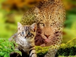 kitten and leopard