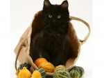black kitty in the basket