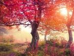 Autumn woods scenery
