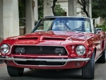 Red Mustang Shelby
