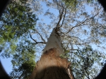 Stand tree 2