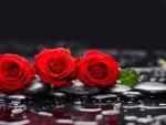 red three rose
