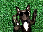 Cool Selfie Dog