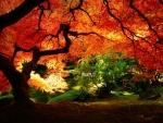 stunning fall scenery