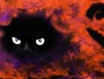 BOo Cat Eyes