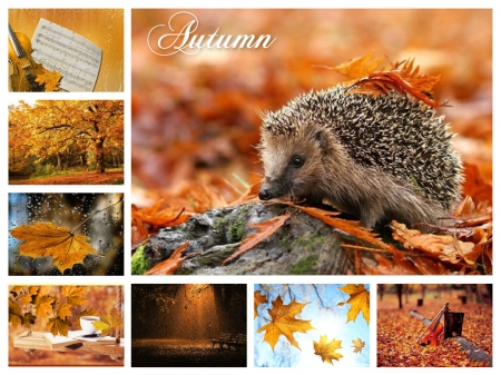 Autumn collage - fall leaves, autumn, collage, abstract