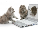 kittens playing with-a laptop computer