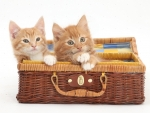 kittens playing in a wicker basket case