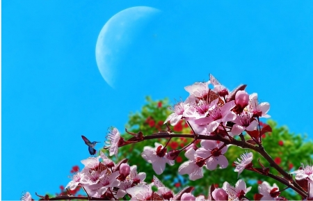 Cherry Blossom and Moon - wonderful, spring flowers, cherry blossom, natura, blu, primavera, fiori, moonshine, flowers, lovely flowers, printemps, spring time, bright sky, sky, flor, ra, ciel, summer day, landscape, summer time, cielo, lovely summer, fleur, moon, blossom, azul, full moon, beautiful nature, luna, beautiful flowers, spring, lovely spring, flower tree, spring day, summer, blue sky, nature, cherry blossom tree