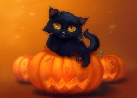 Halloween Kitten Cats Animals Background Wallpapers On Desktop Nexus Image 2032880