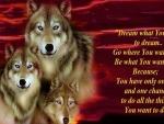 'Wolf wisdom'.....