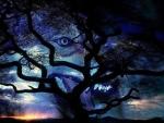 'Wolf spirit'.....