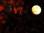 * Watcher of the night *