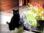 Black beauty and flowers