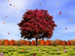 Autumn Leaves in the Breeze