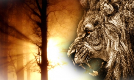 angry lion cats animals background wallpapers on desktop nexus