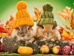Autumn rabbits