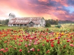 Vermont Blossoms