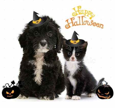 black-white Halloween friends