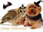 dog and owl on a Halloween