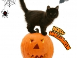 Halloween black kitty