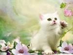 Sweet White Kitty