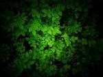 green by mikkoliini