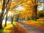 Pathway in autumn park