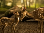Mama Deer and Kid