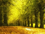 Alley foliage