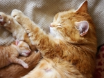 Mom&Baby.