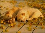 Big Sleep Puppies