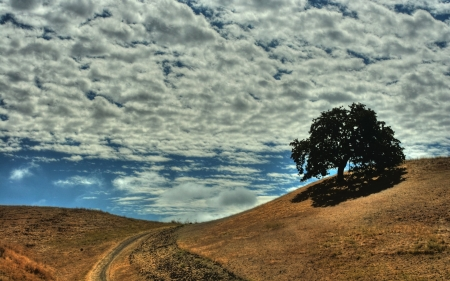 path through the hills under a big sky - path, sky, hills, clouds, tree