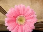 *pink flower*