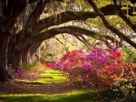 Memory Lane in Garden