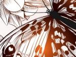 Bronze Butterfly Vector